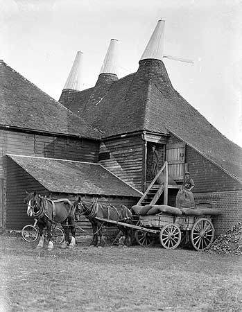 Dried hops being collected from the Oast House at Great Dixter and loaded onto a horse and cart