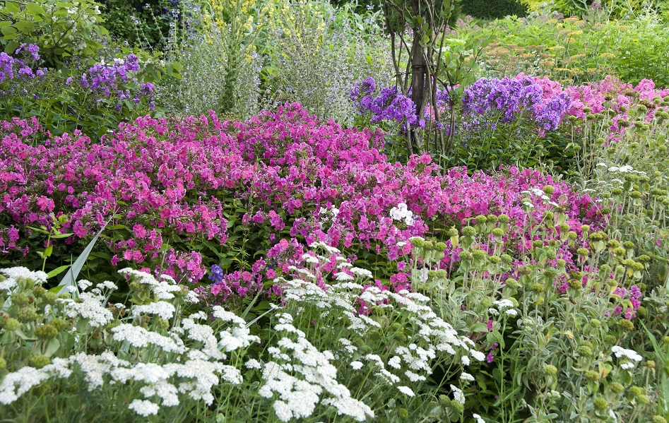 The Long Border planting by Carol Casselden