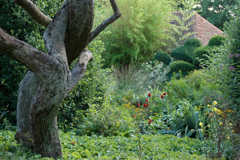 Image of the Blue garden with a sculptural old tree in the foreground and the border to the rear.