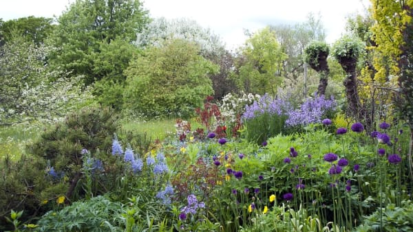 Succession planting in the mixed border