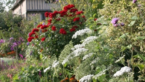Integrating annuals and biennials into your border